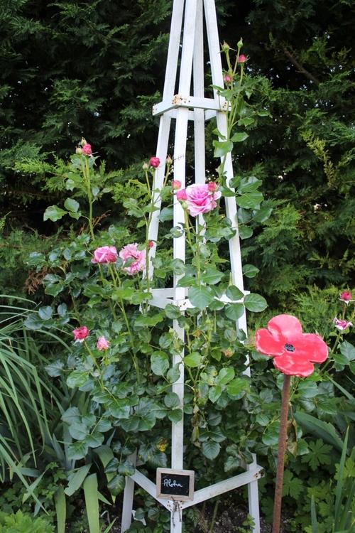 Suite de l'allée des roses
