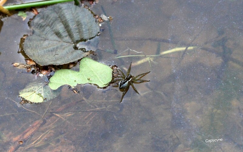 Vers l'étang aux libellules 2