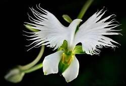 De l'orchidée...