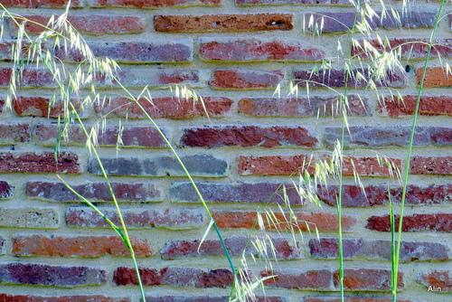Un mur en brique de terre cuite