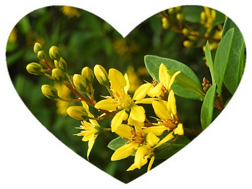 11/5/20 : Fleurs...de mon jardin en Juillet 19 (1/2) -