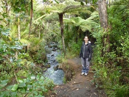 balade dans la forêt des grands kaoris