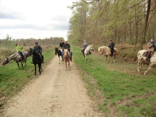 Sortie FER à 9 cavaliers(ères) e Rougemontiers en la forêt de Brotonne le 13 avril 2014