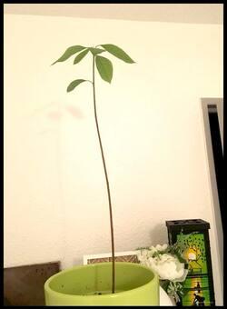 Ma position sur le monde végétal