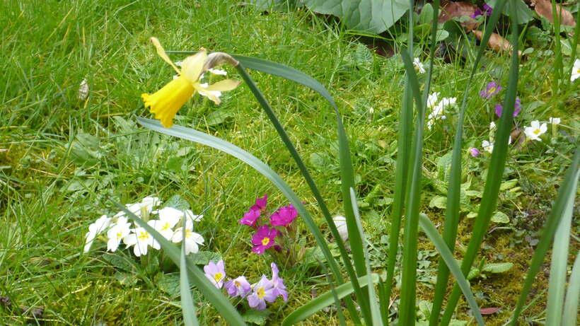 fleurs de mars