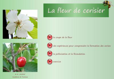 La plante de Camille