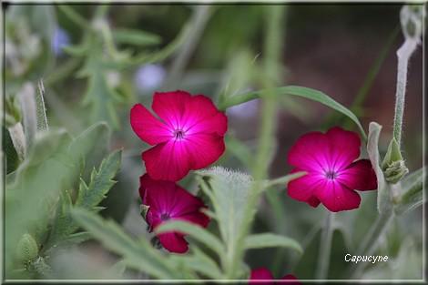 Mariages jolis au jardin
