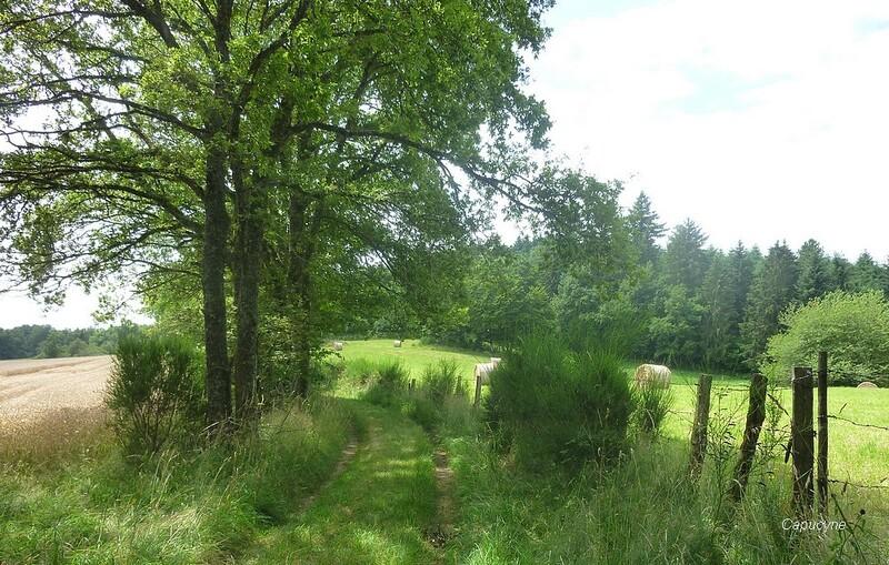 Images de  Creuse -2-  les chemins...