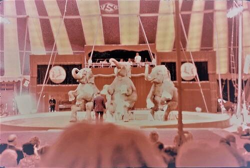 les éléphants de Victor Saulevitch chez Jean Richard ( archives Jean-Claude Murat)