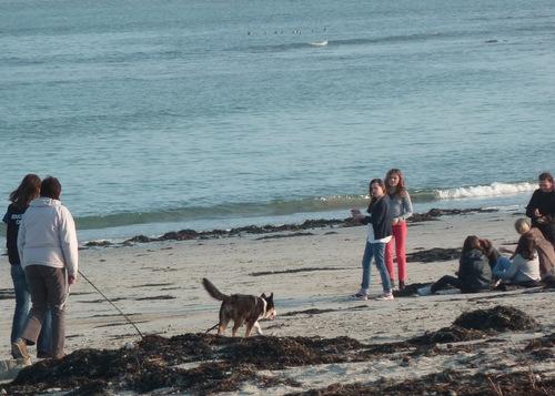 La sociabilisation à l'humain et aux chiens que l'on peut rencontrer