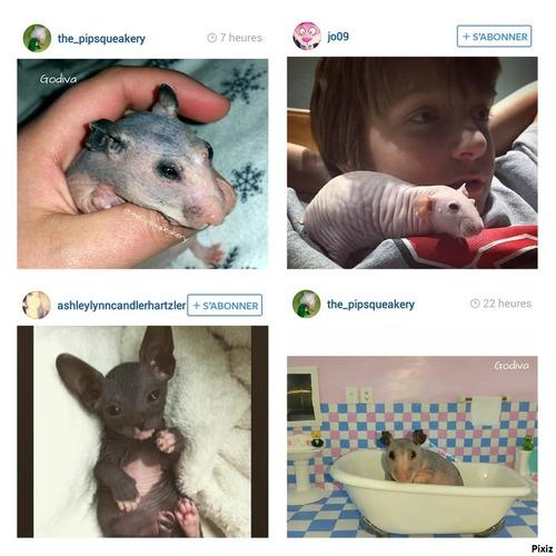 Favoris# Instagram Mars 2015