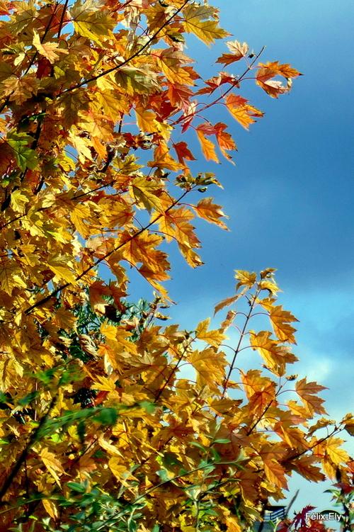 Feuilles d'arbre en automne