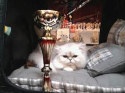 Un petit champion