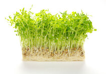 bunch-of-pea-sprouts