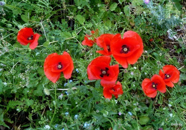 N03 - Rouge coquelicot