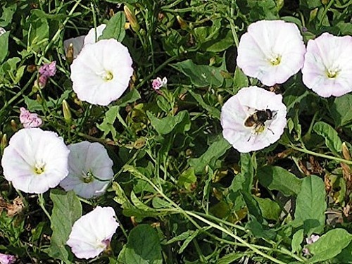 fleur135