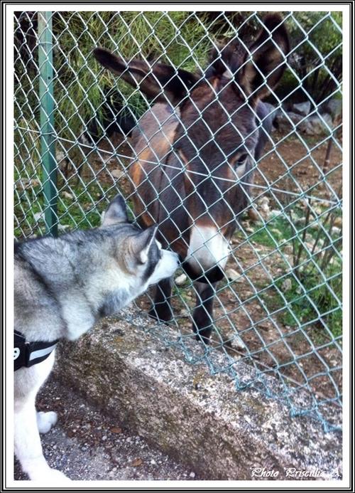 A la découvertes des autres animaux (février 2015)