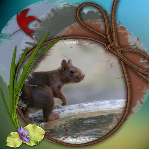 petit ecureuil 1