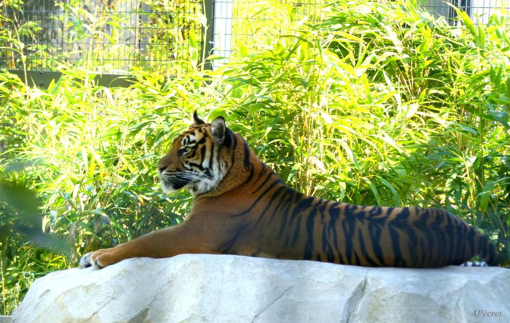 Notre Zoo Amiénois