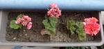 3 juin : Vive les fleurs