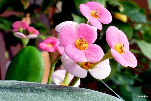 Jolies petites fleurs !
