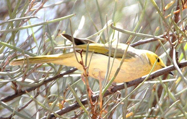 oiseaux-ayers-rock.jpg