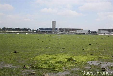 algues-vertes.jpg