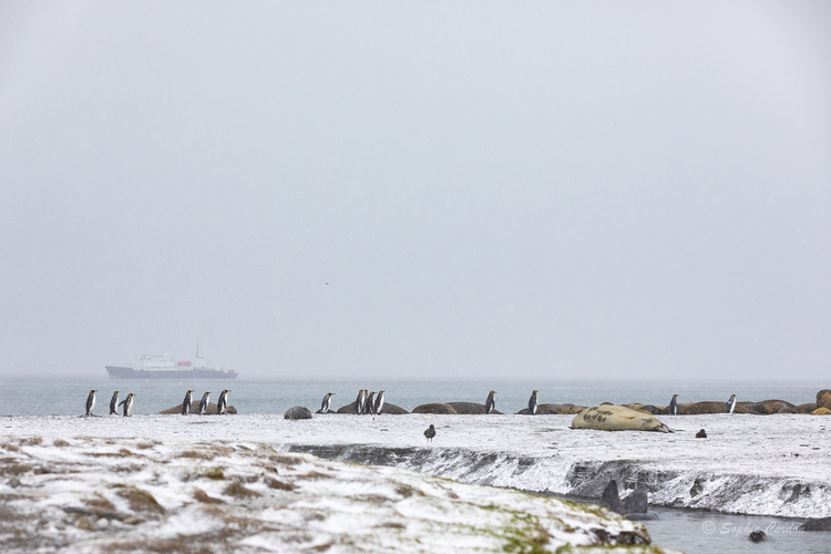 St. Andrews Bay, encore