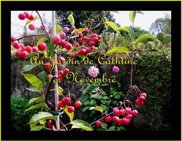 Jardiner avec la lune du 11 au 20 Novembre