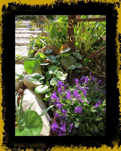Balade au jardin et Avec la Lune du 11 au 20 Février