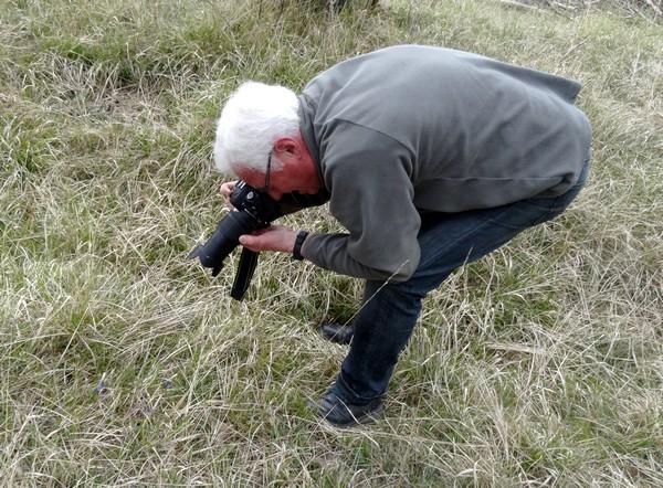 Balade à la recherche d'une plante protégée : la thymélée....