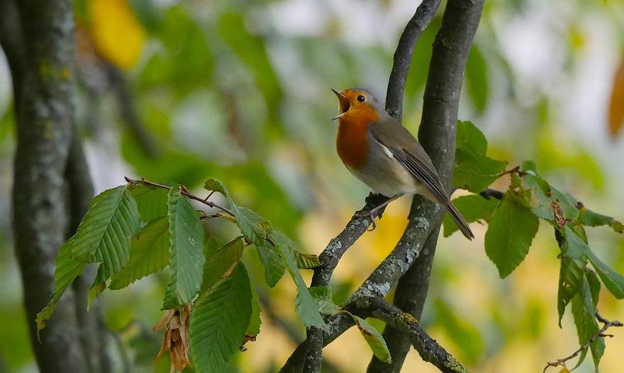 Portraits d'oiseau (7): les plus familiers