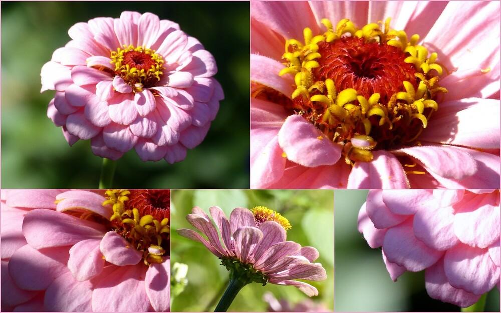 Du soleil, des fleurs et ... Huguette !