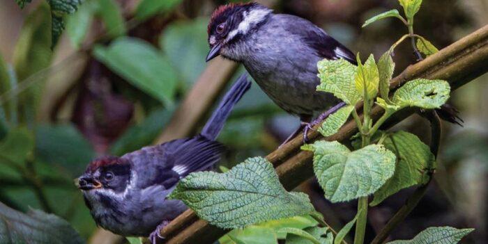 Le Concours De Photographie Audubon 2020 - Capture Des Moments Fugaces D'oiseaux -