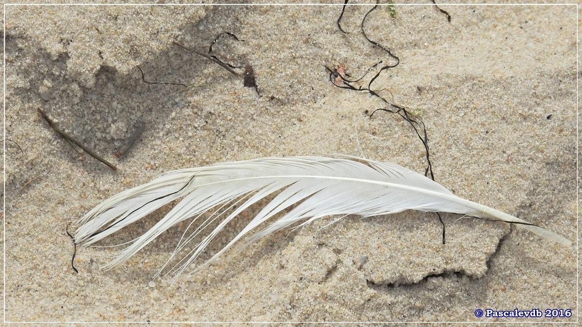En longeant la plage entre Lanton et Cassy - fin Mars 2016 - 6/8