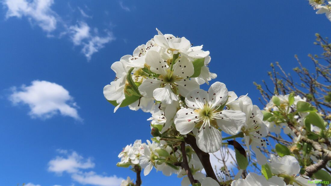 Nos fleurs du jardin - 4