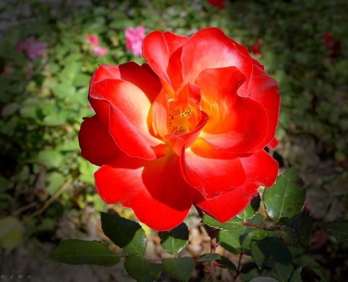 Photos de fleurs pour vous