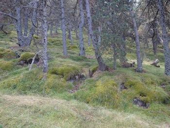 Le sol de la forêt est couvert de mousse