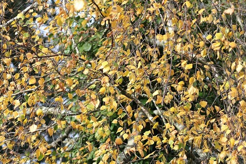 Paillage d'automne au jardin
