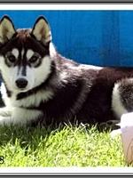 Leïka (4 mois)