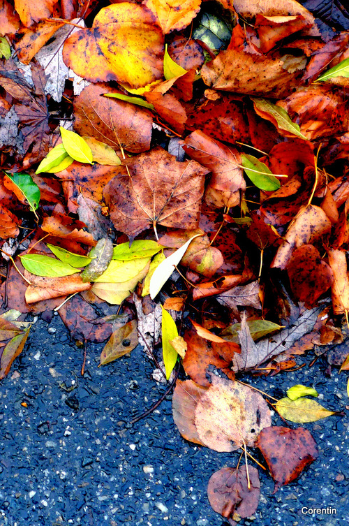 Les feuilles ...