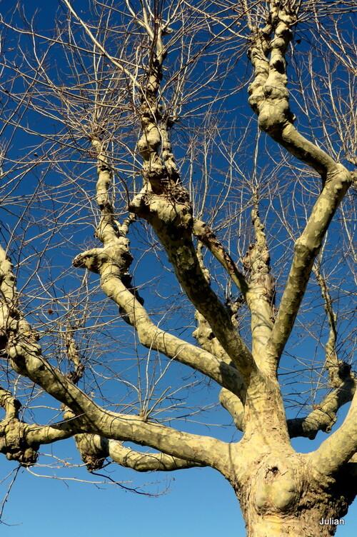 Créatif : couleurs branches ! (2)