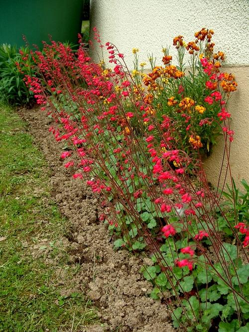 Fleurs de Printemps : En attendant le bon vouloir du Soleil, la nature nous offre ses quelques fleurs