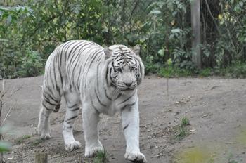 dierenpark amersfoort 2011 174