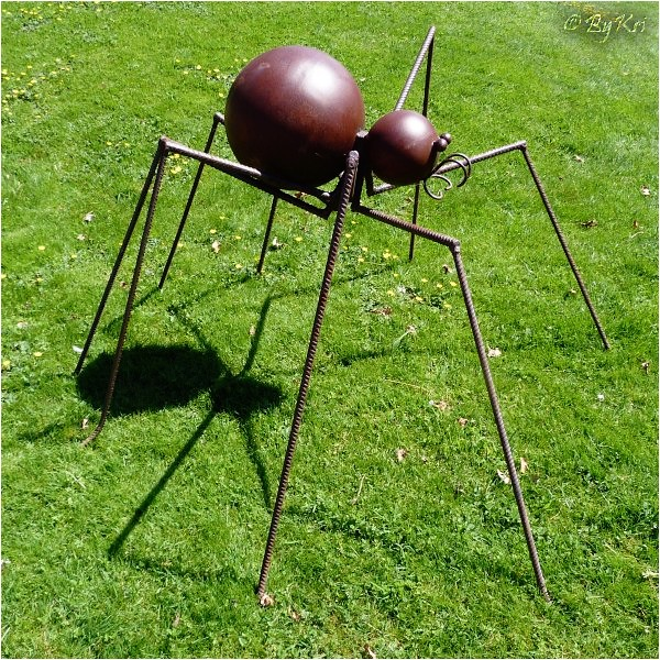 Araignée ...