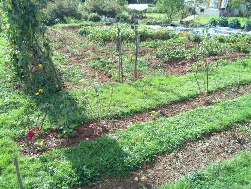 Fin de saison au jardin