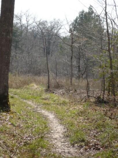 Promenade en forêt 8