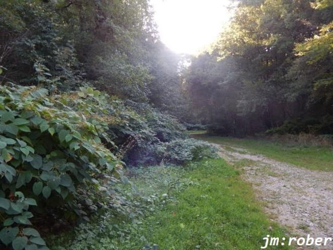 Condat sur vienne: Mon coup de Gueule sauvont notre petit ruisseau le Rigouroux une fois pour toutes.