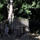 A l'entrée de l'Habitation, l'arbre emmuré  - Photo : Yvon (Février 2015)