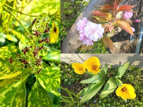 11ème jour de confinement : fleurs du jardin